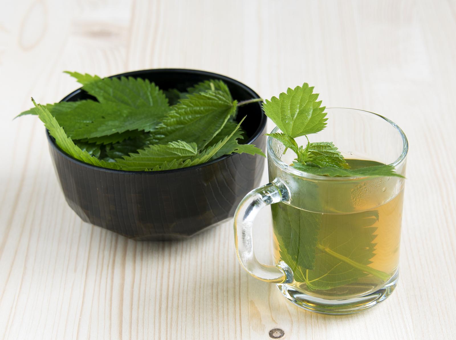 pokrzywa właściwości herbata z pokrzywy